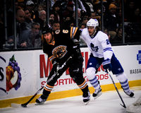 Dennis Wideman, Boston Bruins Stock Image