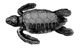 Denny †‹â€ ‹żółw ilustracji