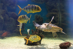 Denny żółw i swój środowisko Zdjęcia Royalty Free
