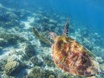 Denny żółw pływa nad denny dno Tropikalnego seashore podwodna fotografia Zdjęcia Stock