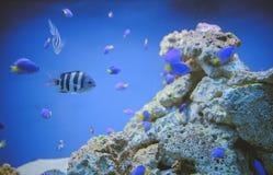 Denny życie: egzotyczna tropikalna rafa koralowa obrazy royalty free