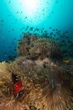 Denny anemon w czerwonym morzu zdjęcia royalty free