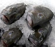 Denny bas na lodzie przy rybim rynkiem zdjęcie stock