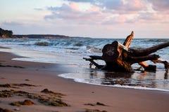 Denny brzeg z starymi drewnami w Jurkalne plaży obrazy stock