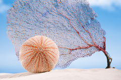 Denny czesak i koral na białym piasku wyrzucać na brzeg Zdjęcie Stock