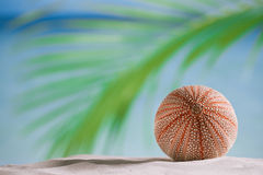 Denny czesak na białej piasek plaży Obraz Stock