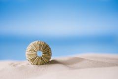 Denny czesak na białej piasek plaży Fotografia Stock