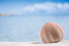 Denny czesak na białej piasek plaży Zdjęcie Royalty Free