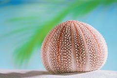 Denny czesak na białej piasek plaży Zdjęcia Stock