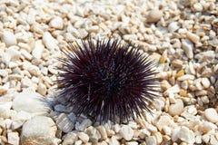 Denny czesak na plaży Fotografia Stock