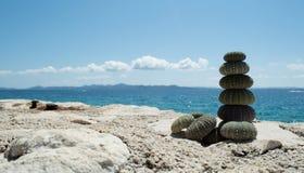 Denny czesak na skale z morzem w tle Fotografia Royalty Free