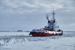 Denny holownik w zimie zdjęcie royalty free