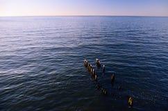 Denny horyzont przy zmierzchem; Falochrony z Seagulls w przedpolu Zdjęcia Stock