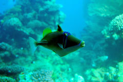 Denny koral i ryba. Obraz Stock