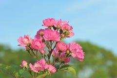 Denny kwiatu i rozsady przemysł Obrazy Stock
