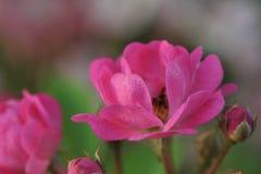 Denny kwiatu i rozsady przemysł Zdjęcia Stock
