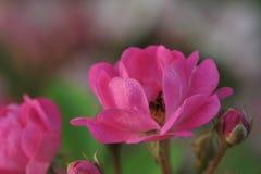Denny kwiatu i rozsady przemysł Obraz Stock