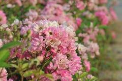 Denny kwiatu i rozsady przemysł Zdjęcie Royalty Free
