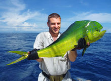Denny połów Delfin ryba obrazy royalty free