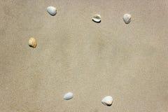 Denny Shell z piaskiem na plaży jest tłem kosmos kopii fotografia stock