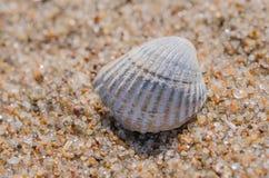 Denny skorupy lying on the beach na plaży Zdjęcie Stock