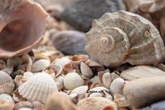 Denny skorupy perły tło Seashells tekstury zbliżenie ish, piasek, koral w plaży zdjęcie stock