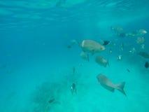 Denny tło z ryba i błękitne wody Obraz Royalty Free