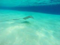 Denny tło z ryba i błękitne wody Zdjęcia Royalty Free