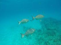 Denny tło z ryba i błękitne wody Obrazy Royalty Free
