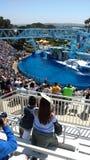 Denny Światowy delfinu przedstawienie Obrazy Stock