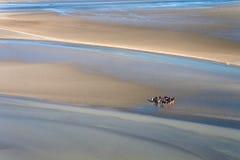 Denny wybrzeże przy niskim przypływem Fotografia Royalty Free