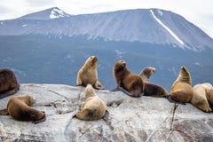 Dennych lwów wyspa - Beagle kanał, Ushuaia, Argentyna Obrazy Royalty Free