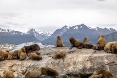 Dennych lwów wyspa - Beagle kanał, Ushuaia, Argentyna Zdjęcie Royalty Free