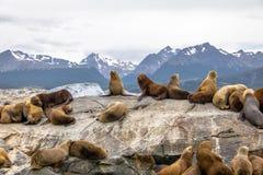 Dennych lwów wyspa - Beagle kanał, Ushuaia, Argentyna Zdjęcia Stock