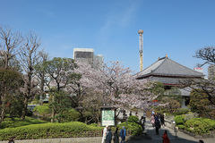 Denpo-in in Asakusa during cherry blossom on stock image