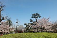 Denpo-in is one os the most beautiful gardens. Asakusa Denpoin Gardens Tokyo's Hidden Gem royalty free stock photos