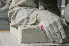 denrosa färger nejlikan ligger på en sockel bredvid beståndsdelen av monumentet av det andra världskriget n Mamaeven Kurgan arkivbild