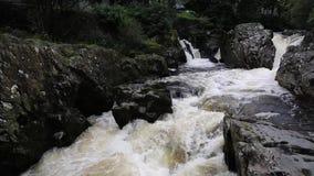 Densamundervisnings- Wales UK Snowdonia nationalparken med dess snabba flödande flod med vitt vatten som över flödar, vaggar lager videofilmer
