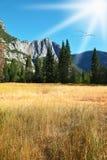 Dense autumn grass in park in California. Stock Photo