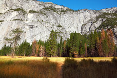 Dense autumn yellow grass in park in California. Royalty Free Stock Images