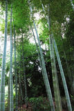 Bamboo, bamboo leaves Stock Photo
