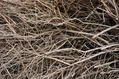 Dense branches background Stock Photography