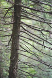 Dense branches Royalty Free Stock Photo