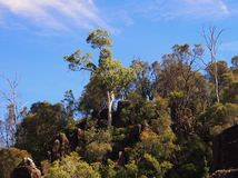 Dense Bush, Tasmania Stock Photo