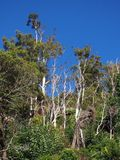 Dense Bush, Tasmania Stock Photos