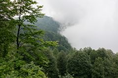 Dense clouds in the Mountains rise to the edge of the forest royalty free stock image