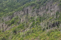 Dense coastal vegetation helps stabilise the soil Stock Image