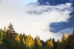 Dense coniferous autumn forest in magical morning mist Royalty Free Stock Photography