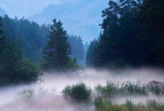 Dense fog. Forest and river during dense fog. Composition of the nature Stock Photos