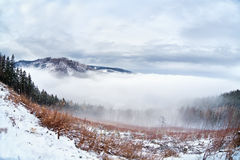 Dense fog in Harz mountains Stock Image